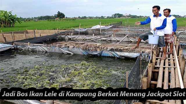 Jadi Bos Ikan Lele di Kampung Berkat Menang Jackpot Slot